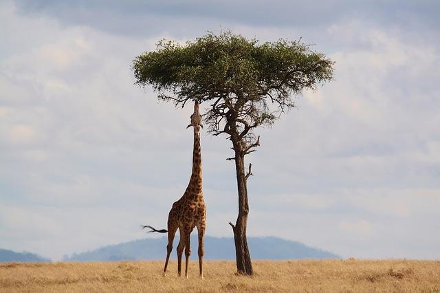 rondreis-Zuid-Afrika